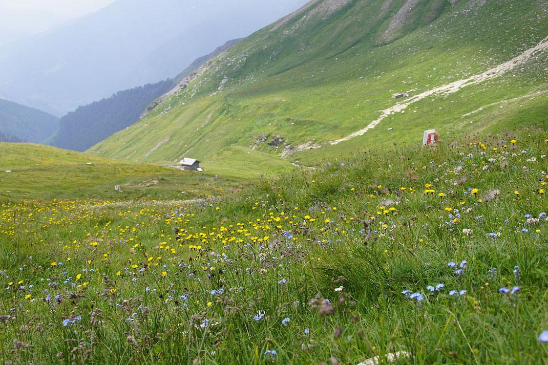 Blumenwiese entlang des Weißenbachs, im Hintergrund ist der Steig für den Rückanstieg ins Schigebiet zu erkennen