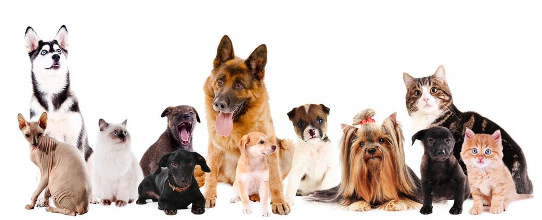 Tierkommunikation, Energiearbeit und eine stimmige Ernährung sind wichtig für sie.