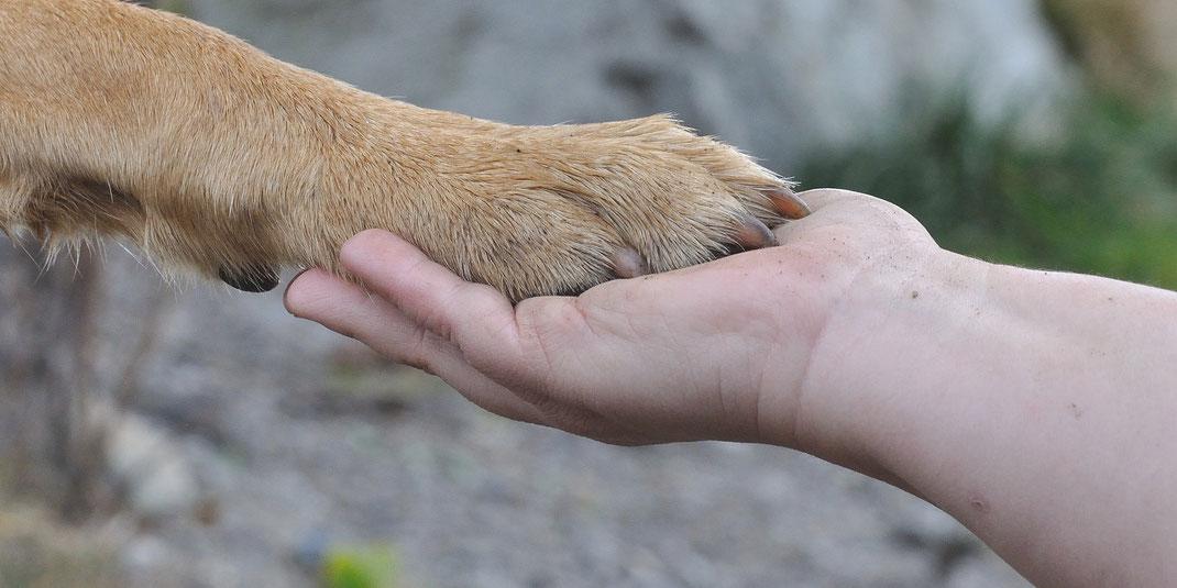 Natürlich-Hund, die Hundeschule für Mensch & Hund im Emmental, Bild mit Hand und Pfote