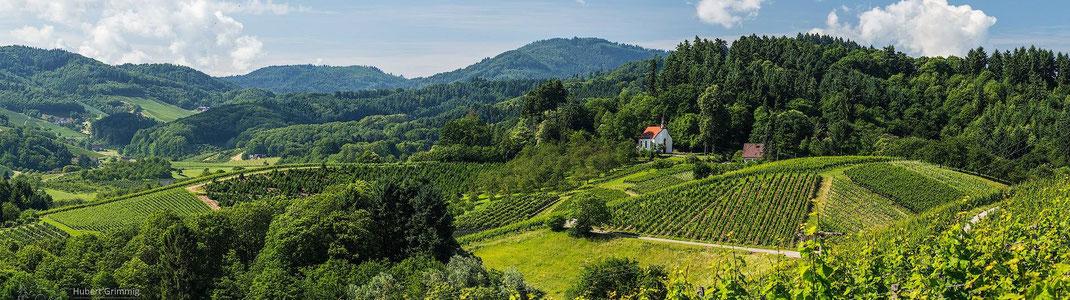 Zwischen Oberkirch und Durbach, an der Badischen-Weinstraße, liegt der Weinort  Bottenau. Umgeben von Wald und Reben steht hoch oben auf dem Berg  majestätisch die Wallfahrtskapelle St. Wendel.