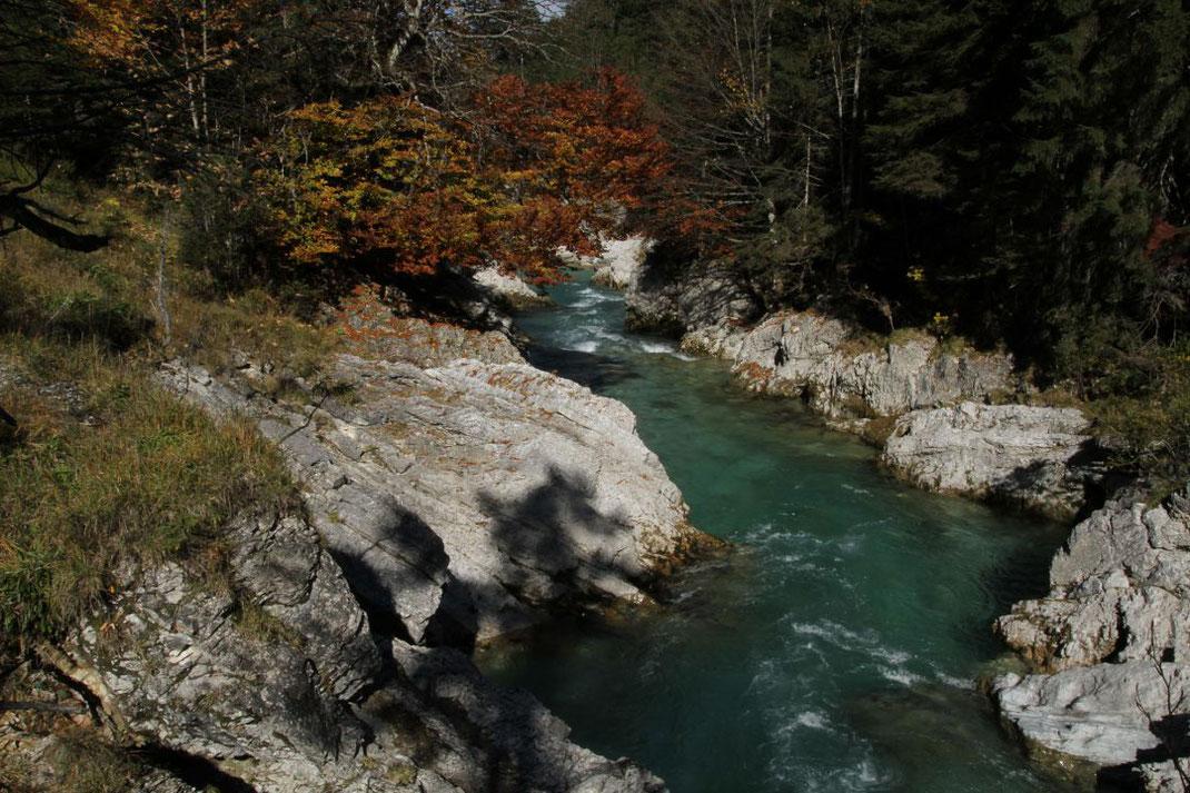 Bayerns Natur ist wunderschön und einzigartig. Der LBV schützt Lebensräume für viele Tier- und Pflanzenarten