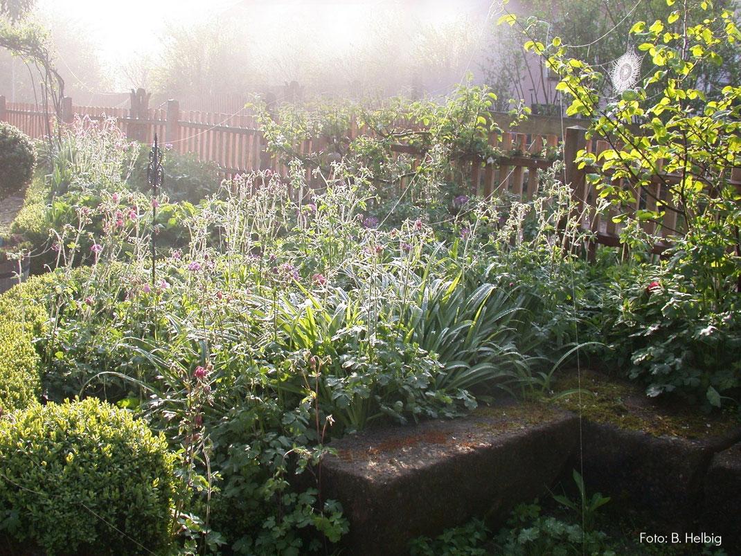 Naturgarten, Morgentau, Pflege, wachsen lassen, Steine
