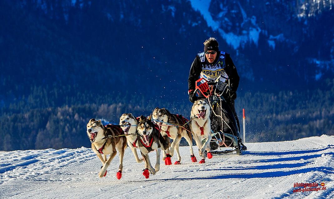 Europameisterschaft Schlittenhunde Rennen in Inzell vom 03 - 05. Februar 2017.