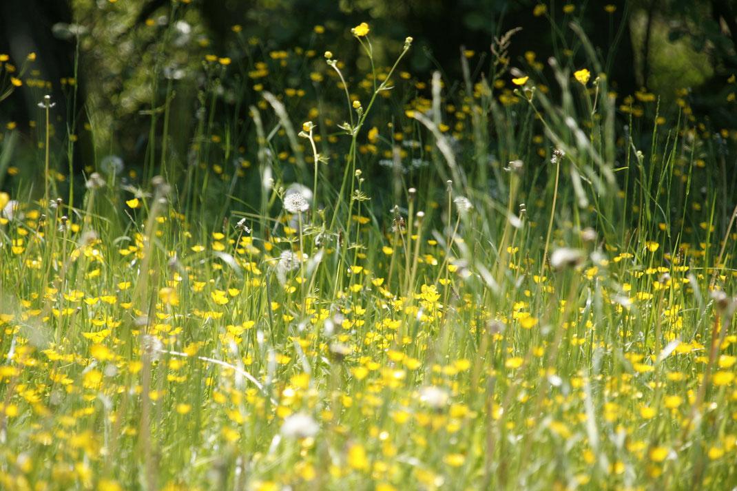 Bild: Frühling Heuschnupfen Matcha Kur