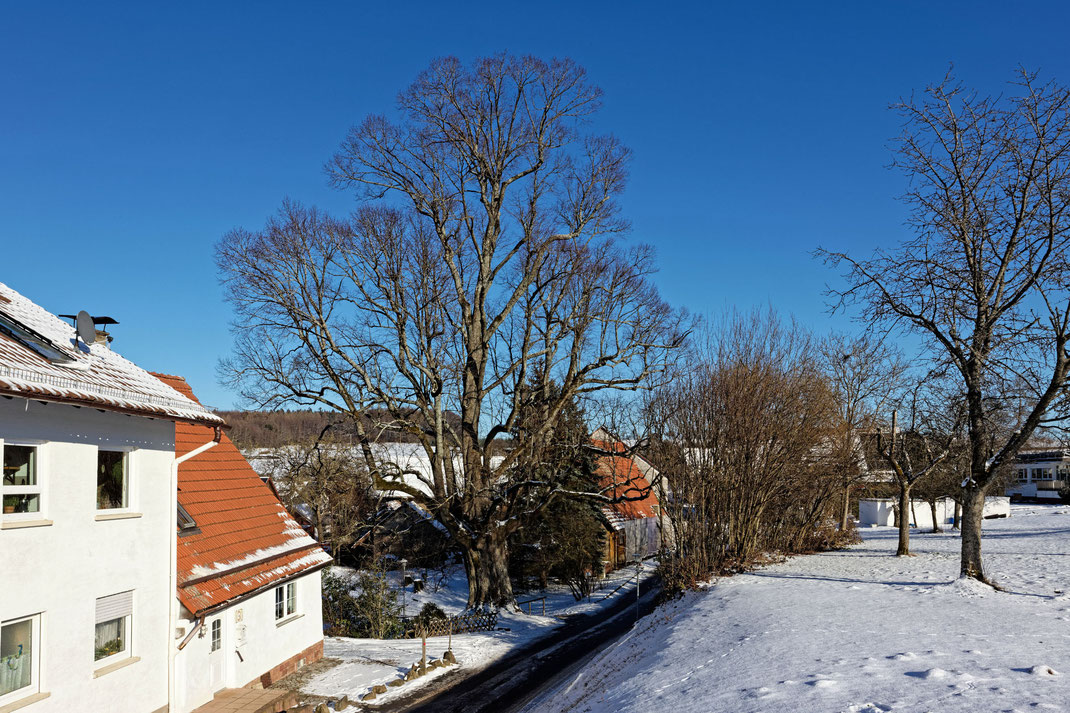 Linde in Waldkatzenbach