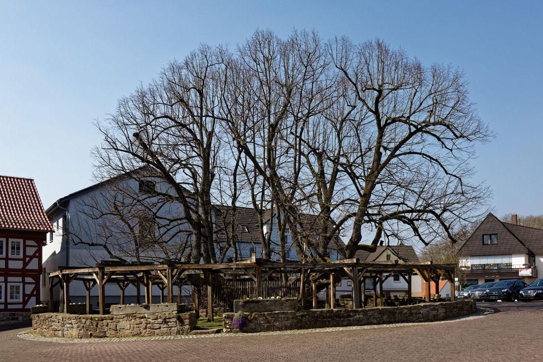 Linde in Schenklengsfeld