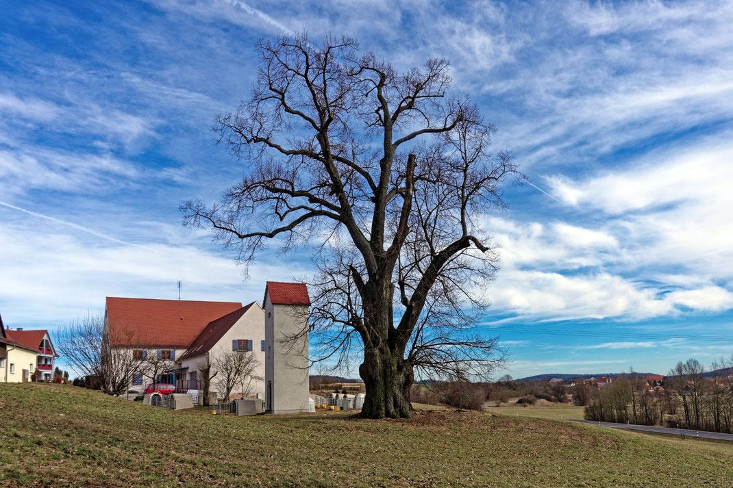 Linde am Kolbenhof bei Alfershausen