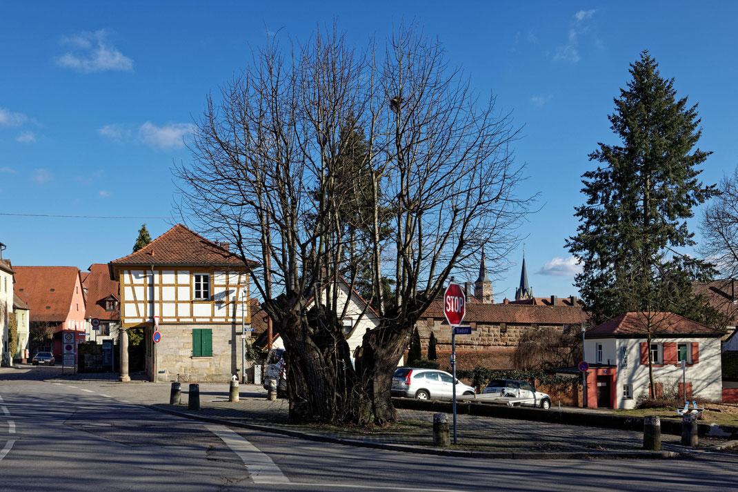 Alte Linde in Schwabach