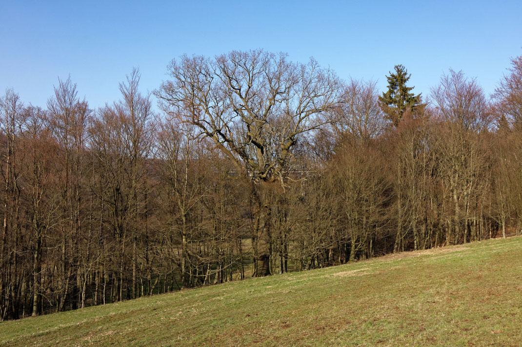 Grenzlandeiche bei Oberzell