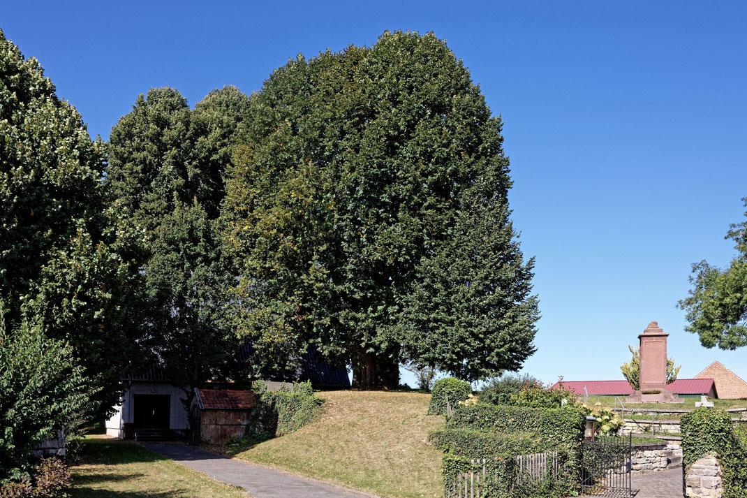 Linde auf dem Friedhof in Obermeiser
