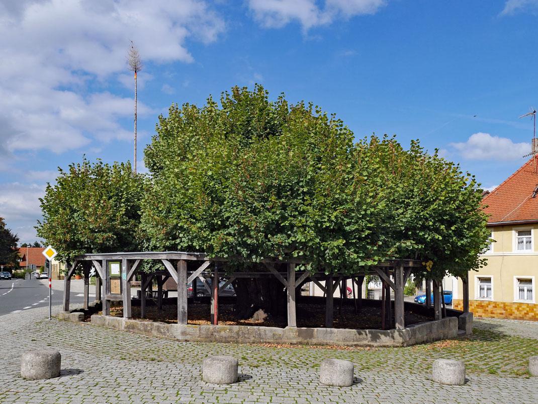 Tanzlinde in Effeltrich