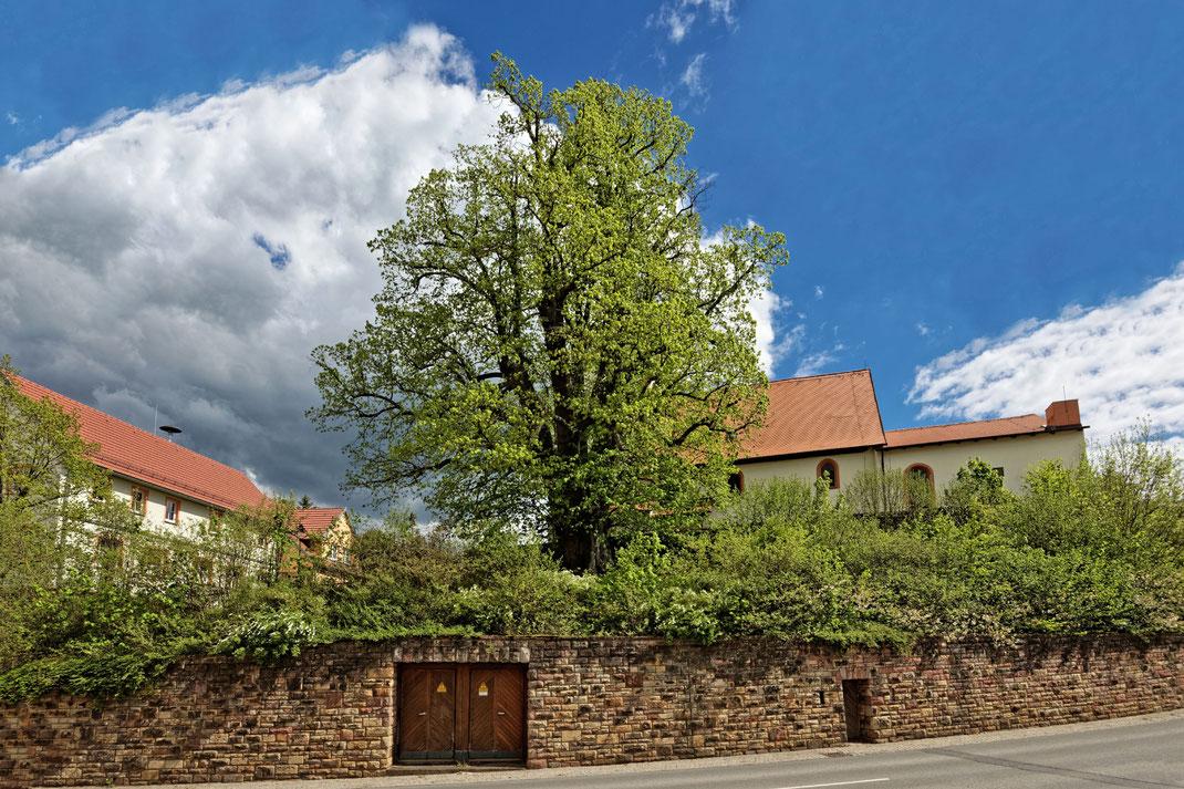 Linde neben der Kirche in Sondernau