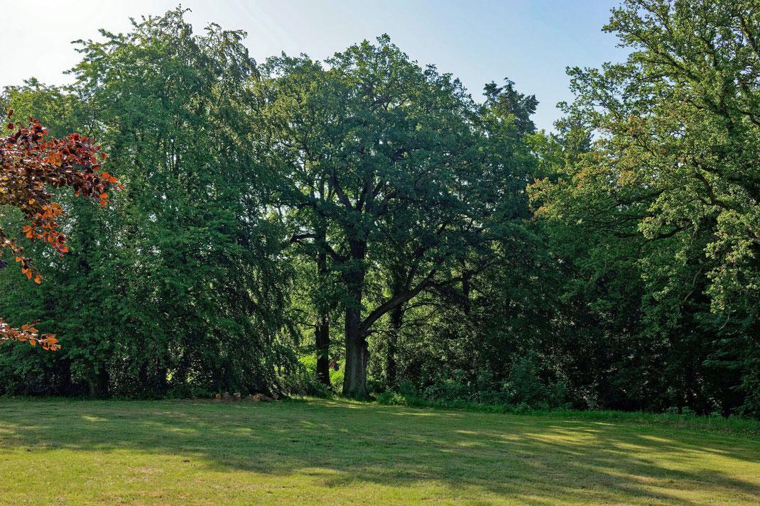 Eiche im Schlosspark in Hoppenrade