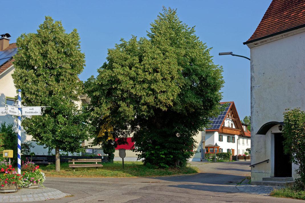 Friedenslinde in Schöneschach