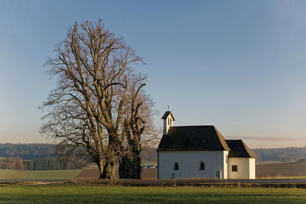 Linde bei der Freibergkapelle bei Deinschwang