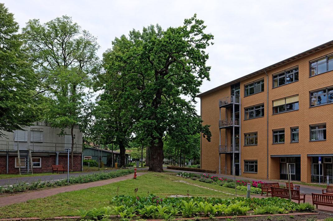 Eiche in Kloster Lehnin