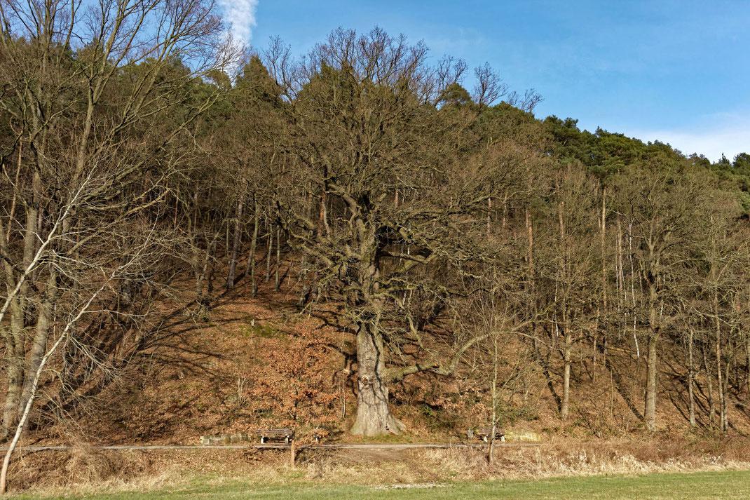 Hegemeister-Wiegand-Eiche bei Harnrode