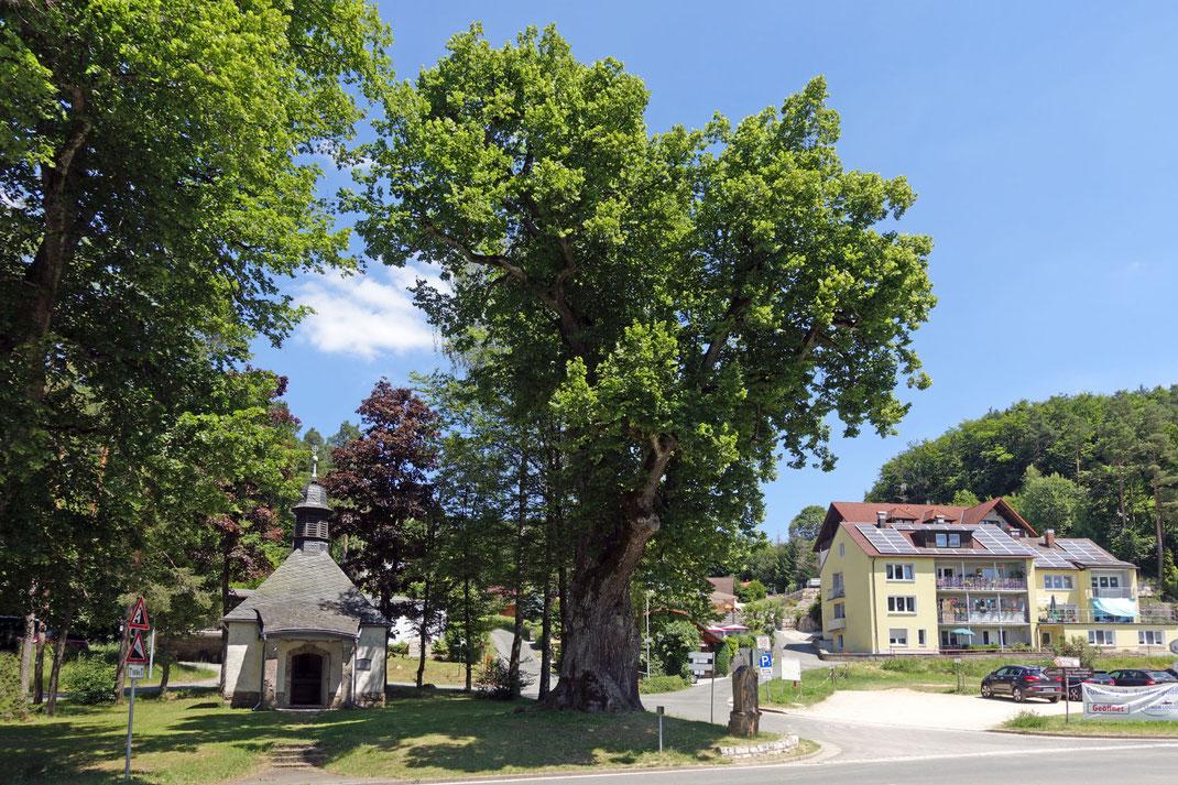 Badangerlinde in Gößweinstein