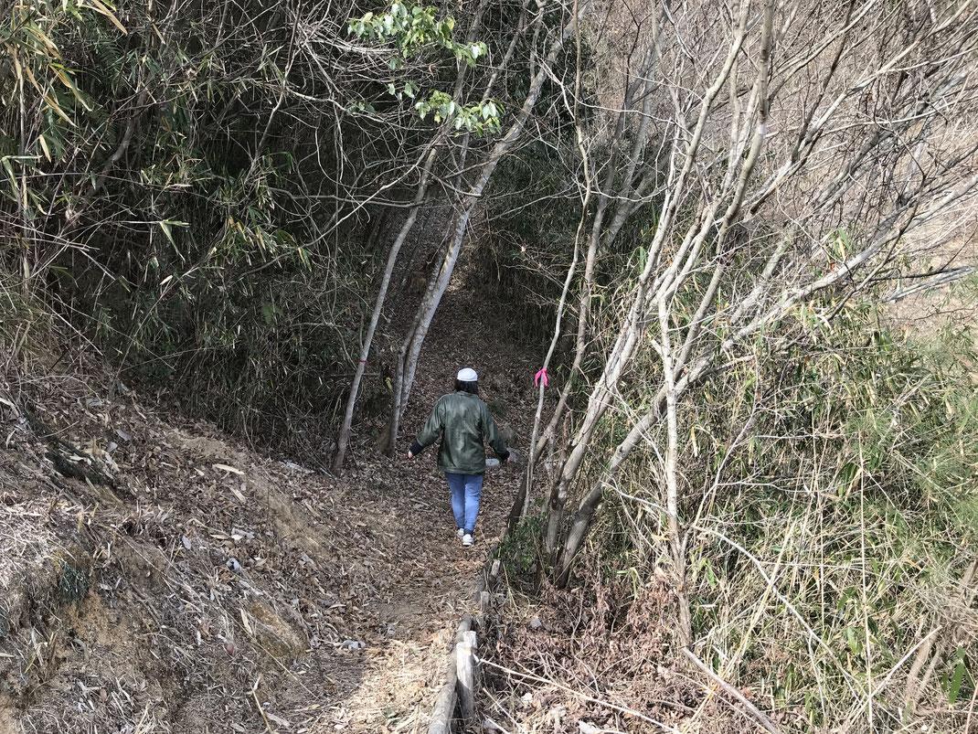 春日野側伴峠登山道