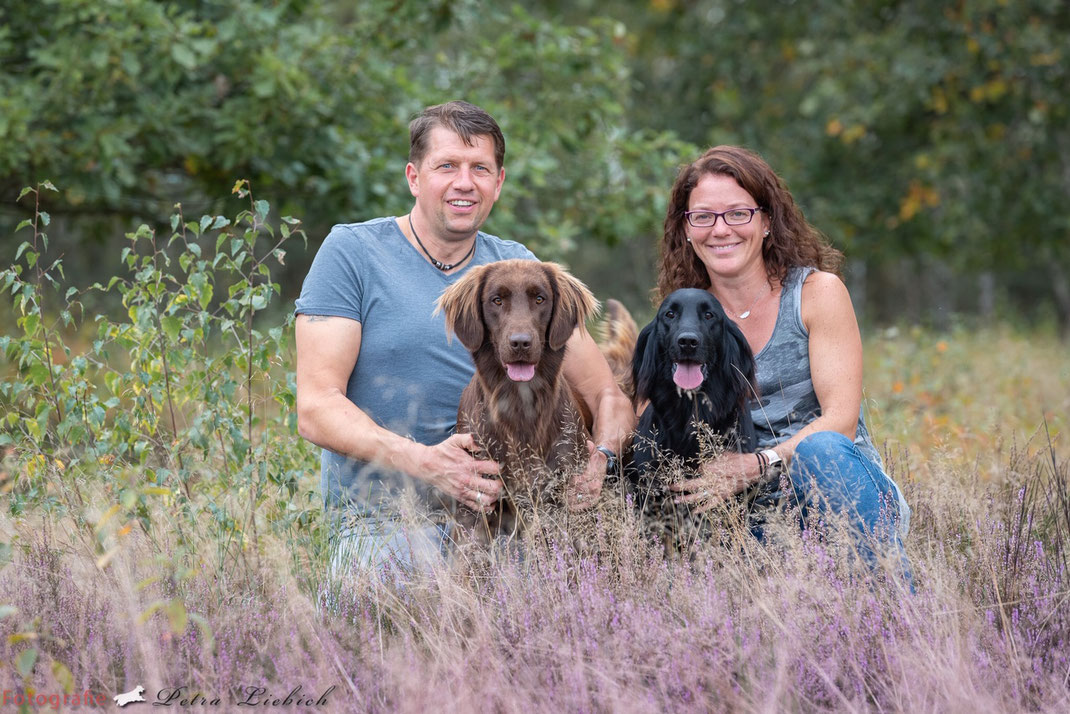 Flat Coated Retriever Zucht Deckrüde Eifel NRW