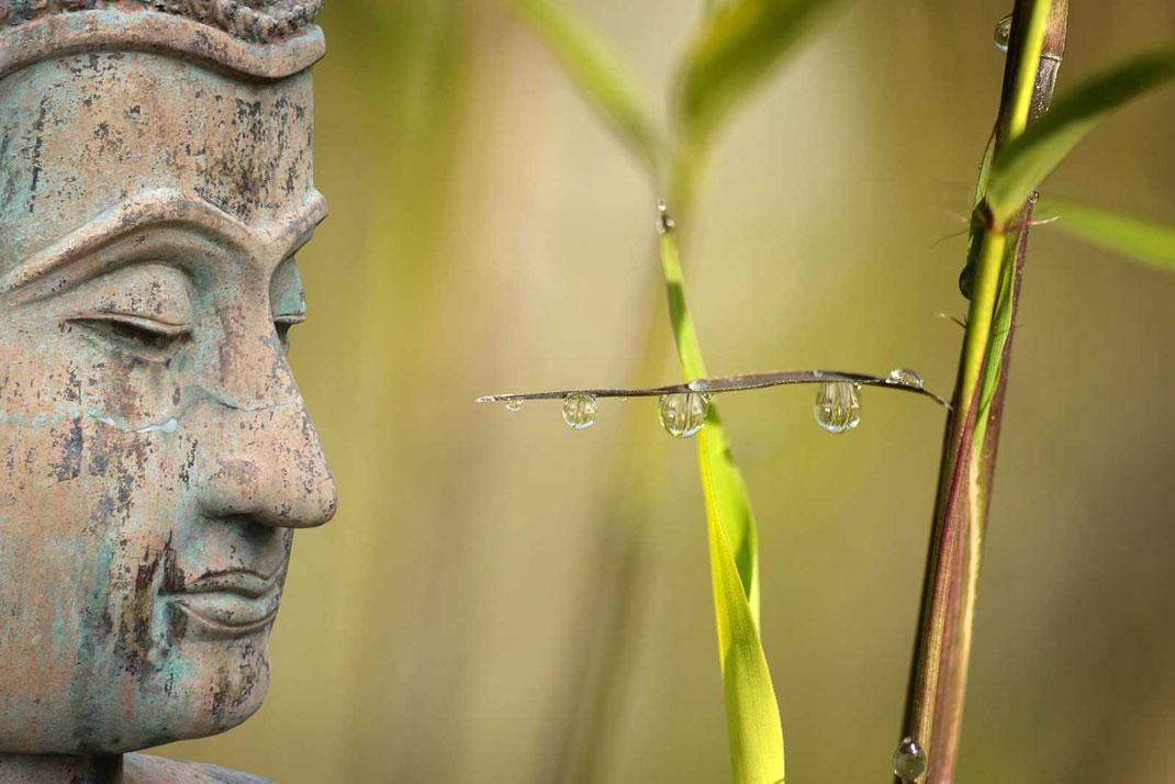 hoch entwickelte Medizin, Prinzipien der taoistischen Philosophie - Nadeln, Moxa, Meridiane, Akupunktur, Qi, Yin und Yang, 5 Elemente, 5 Wandlungsphasen