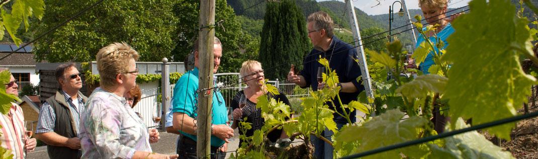 Buchen Sie eine wandernde Weinprobe über den Rotweinwanderweg von Mayschoß Richtung Rech an der Ahr.