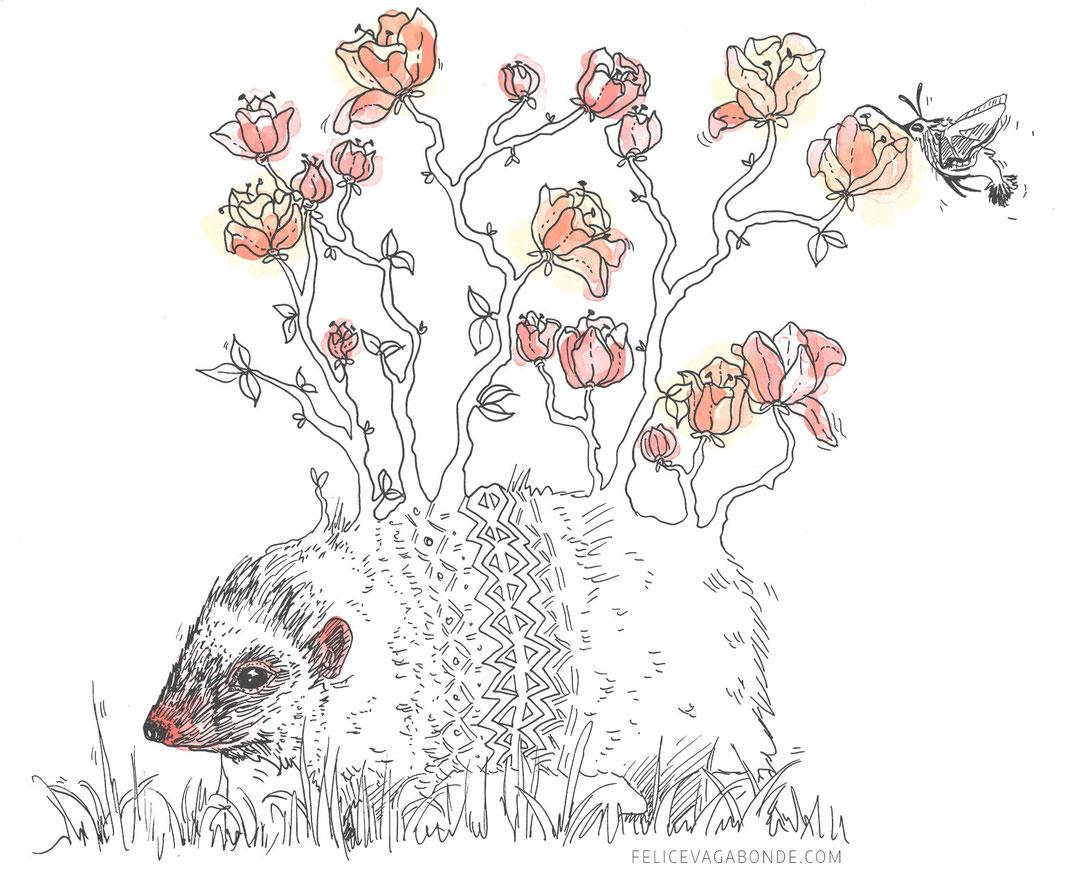 """Illustration """"Igel"""", Felice Vagabonde, Illustratorin aus Hamburg"""