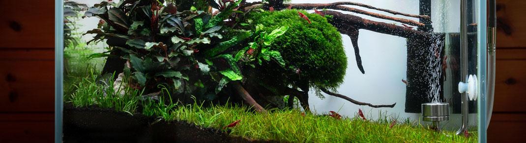 Detailaufnahme aus einem bepflanzten Naturaquarium