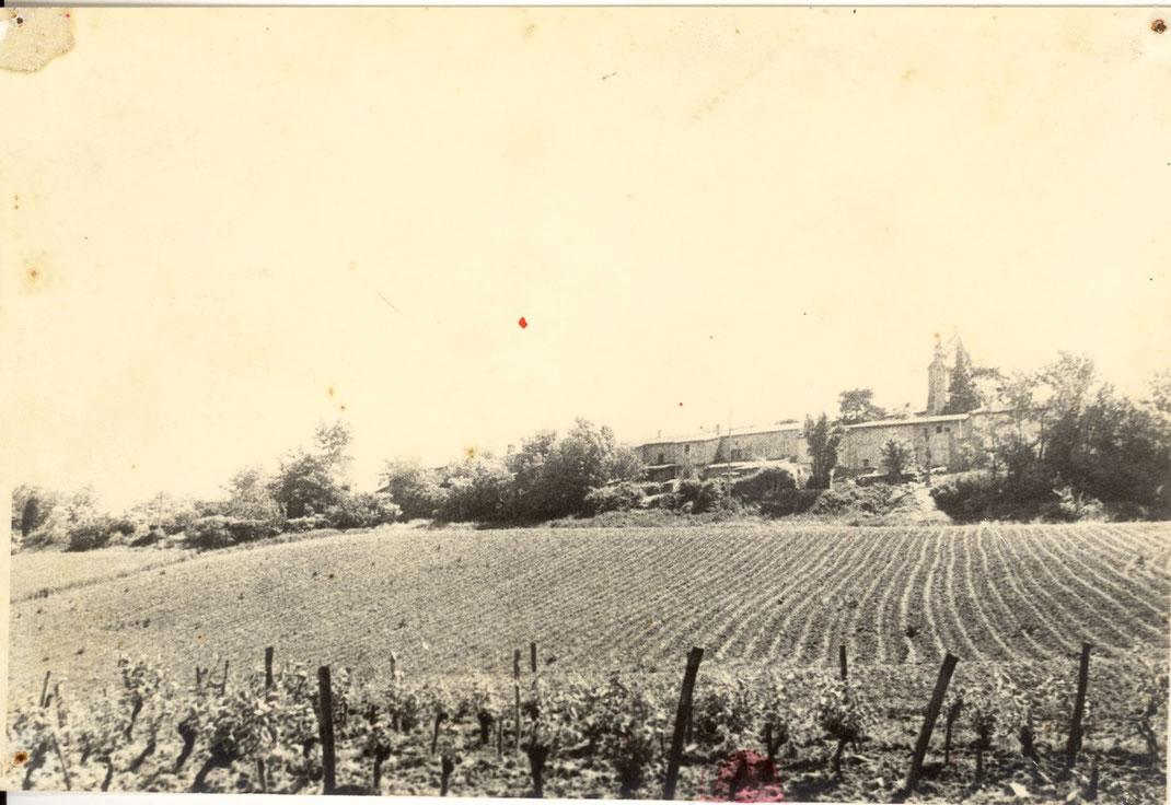 La vigne derrière le village