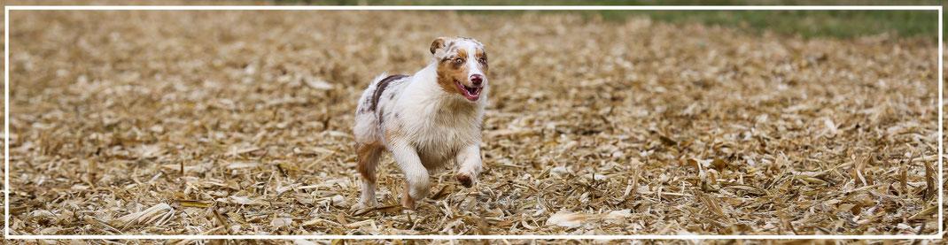Tierfotograf-Juergen-Sedlmayr-Hund2