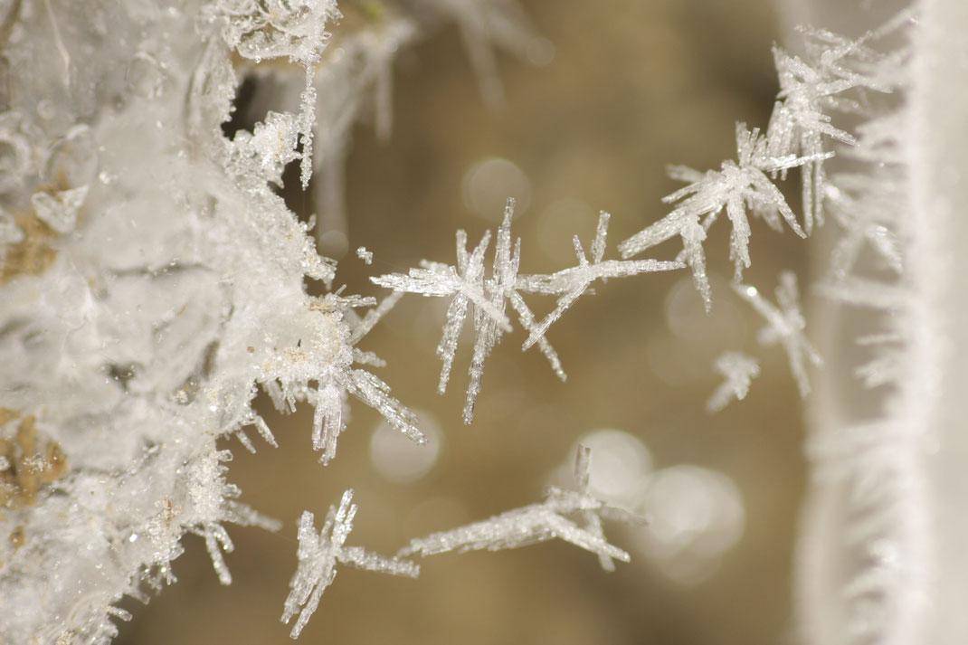Franz - Foto 8 - Eiskalte Spinnfäden