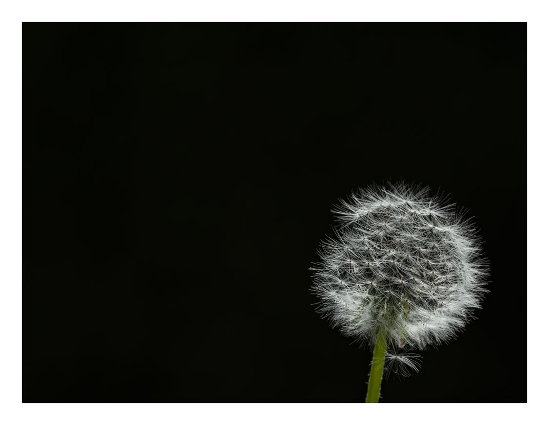Florian - Foto 1