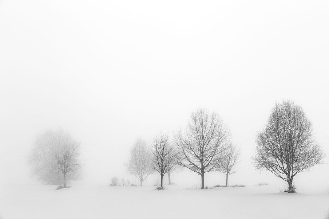 Conny - Foto 6 - Magische Winterlandschaft