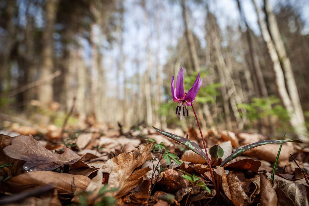Gabi - Foto 2 - versteckter Frühlingsbote