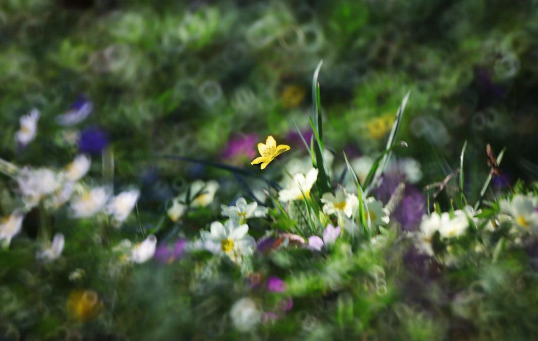 Bea - Foto 6 - Die Blumen beginnen zu blühen und die Elfen tanzen  (Objektiv CANON 500MM F8 S.S.C. REFLEX LENS BJ1979)