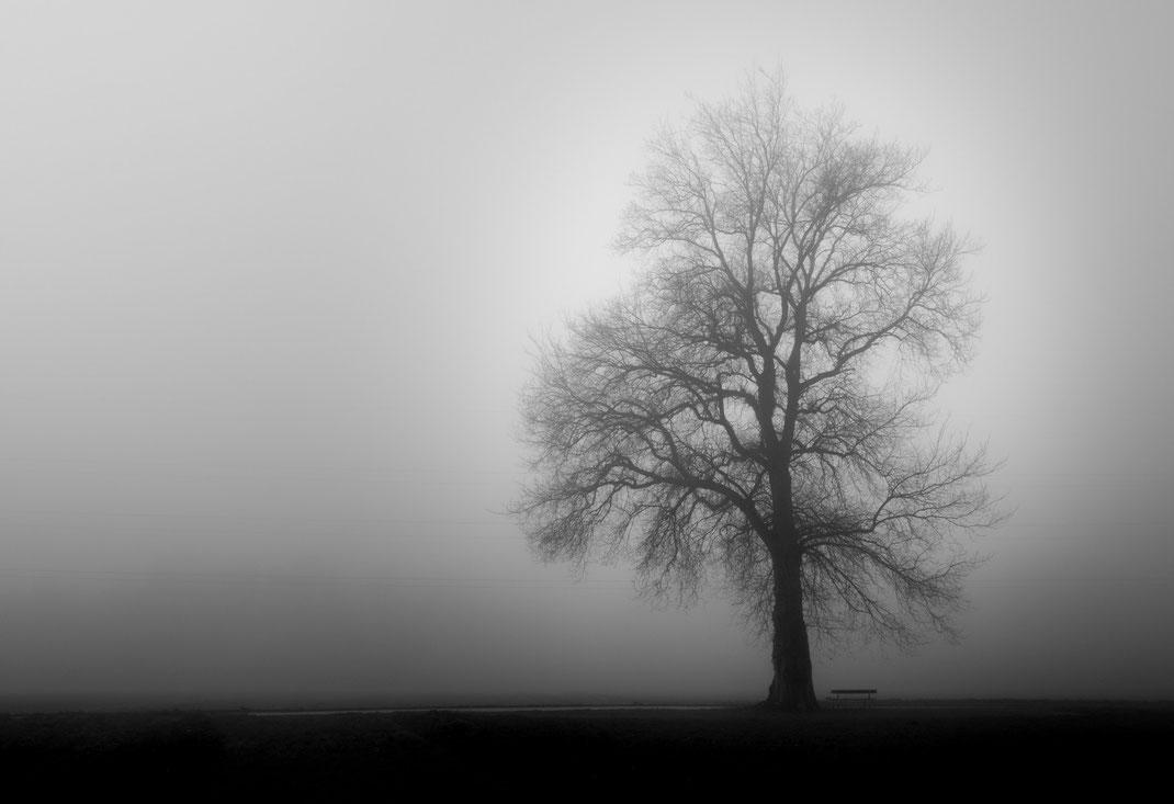 Christian - Foto 11 - Baum in Grau