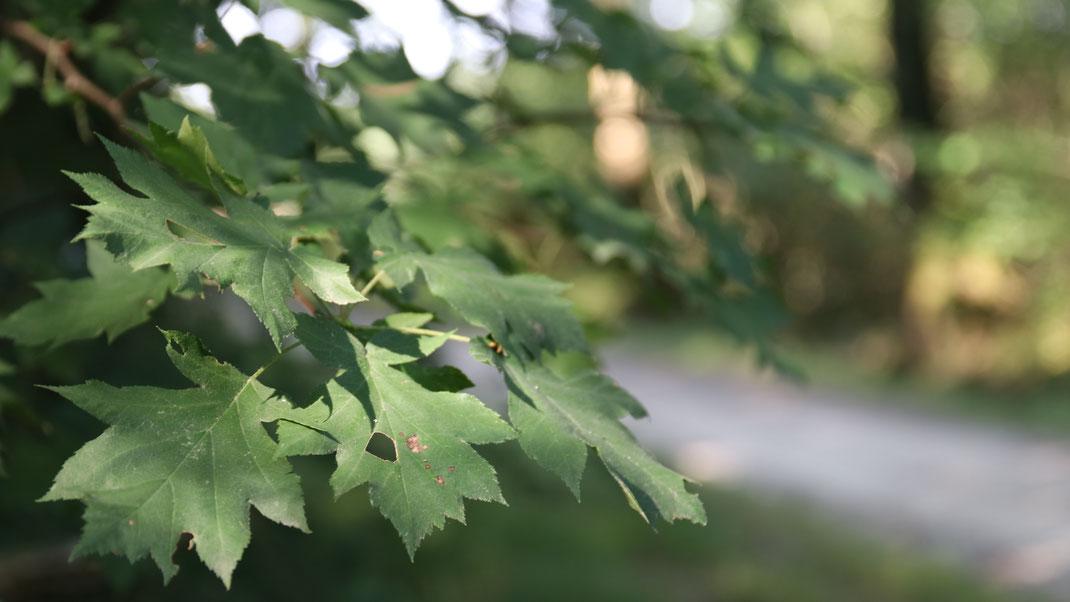 Patrimoine naturel en Touraine - arbre & forêt