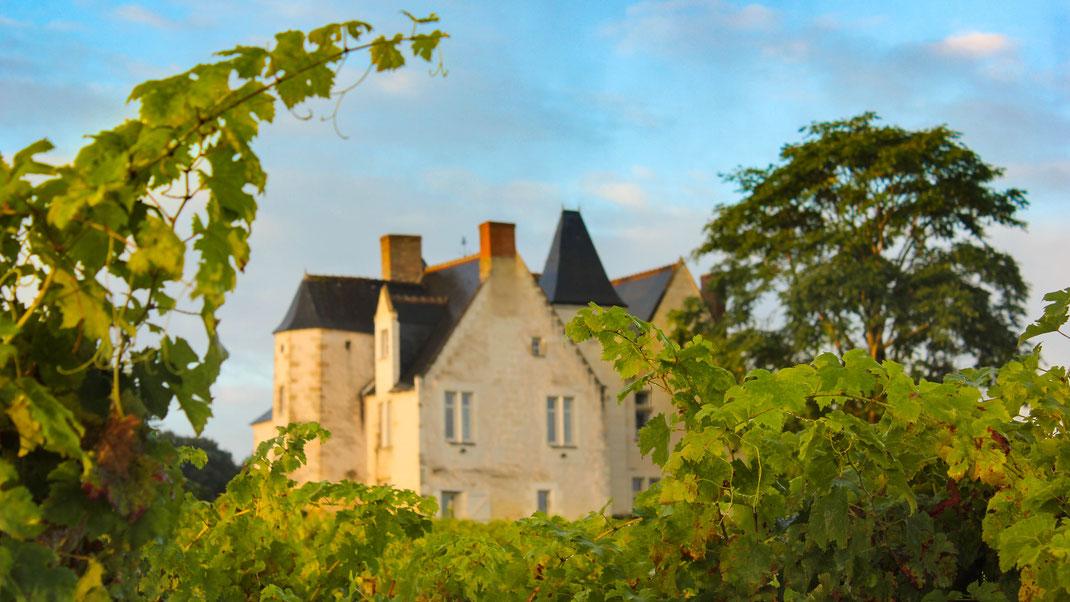 Visite oenologique du vignoble du Château de la Roche (Azay-le-Rideau)