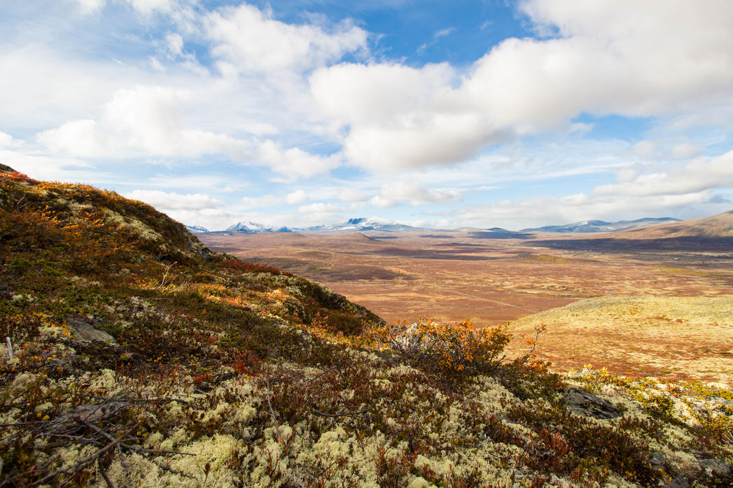 Dovrefjell Nationalpark - Norwegen