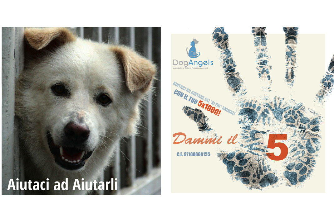 5x1000 animali Dog Angels