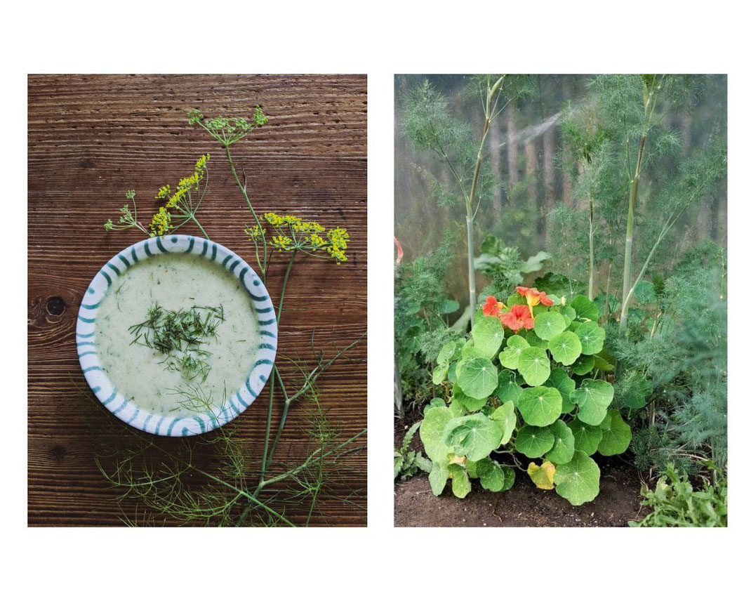 Romanesco-Dill Suppe und Dill Pflanze im Garten.