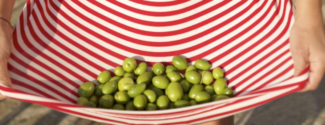 Premium natives Olivenöl extra aus der Frühernte