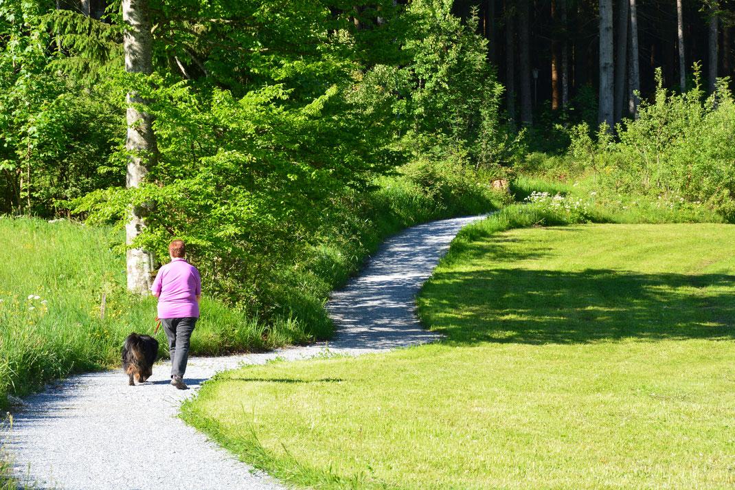 Breit angelegte Wege  -  durch Wiesen und Wald - mit genügend Platz auch für Kinderwagen oder Rollstuhl