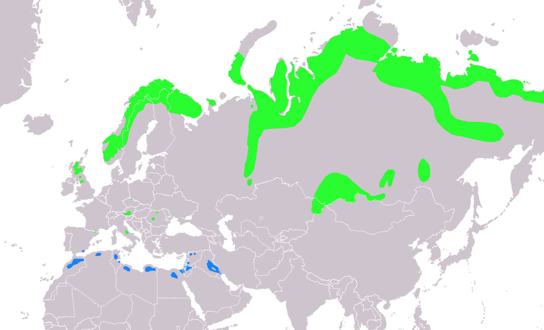 Brutareal grün und Winterquartier blau. Quelle: Wikipedia