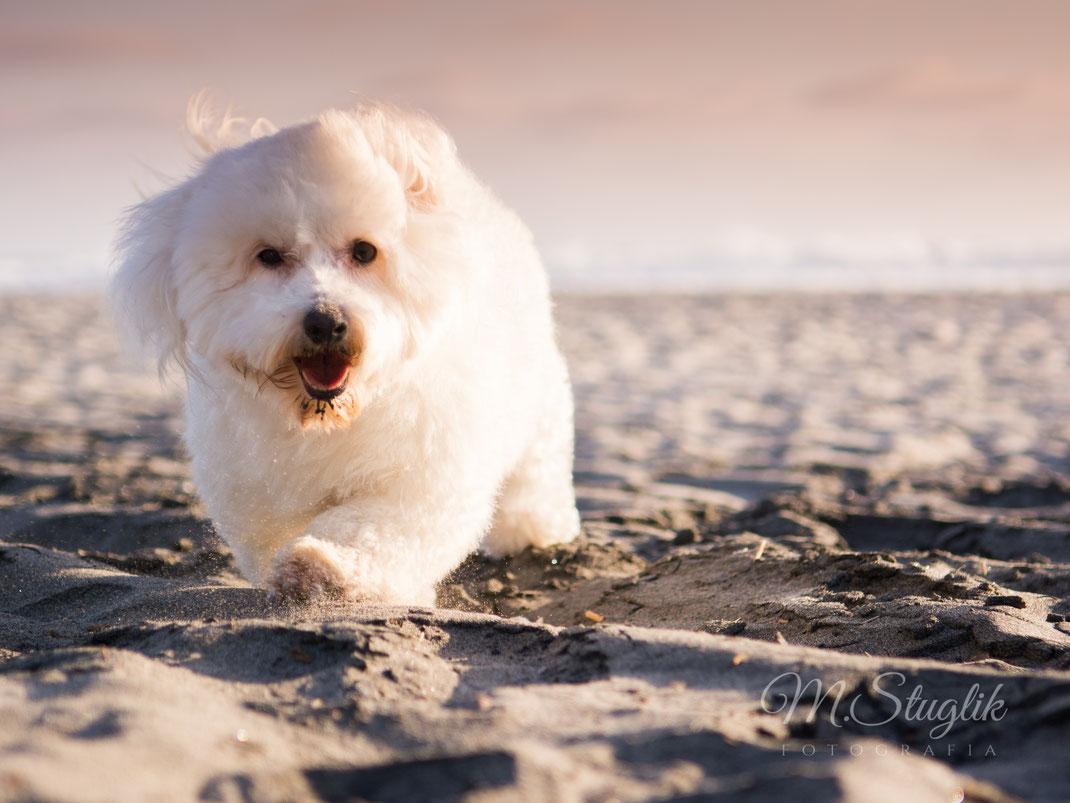 fotos de perro en tijuana