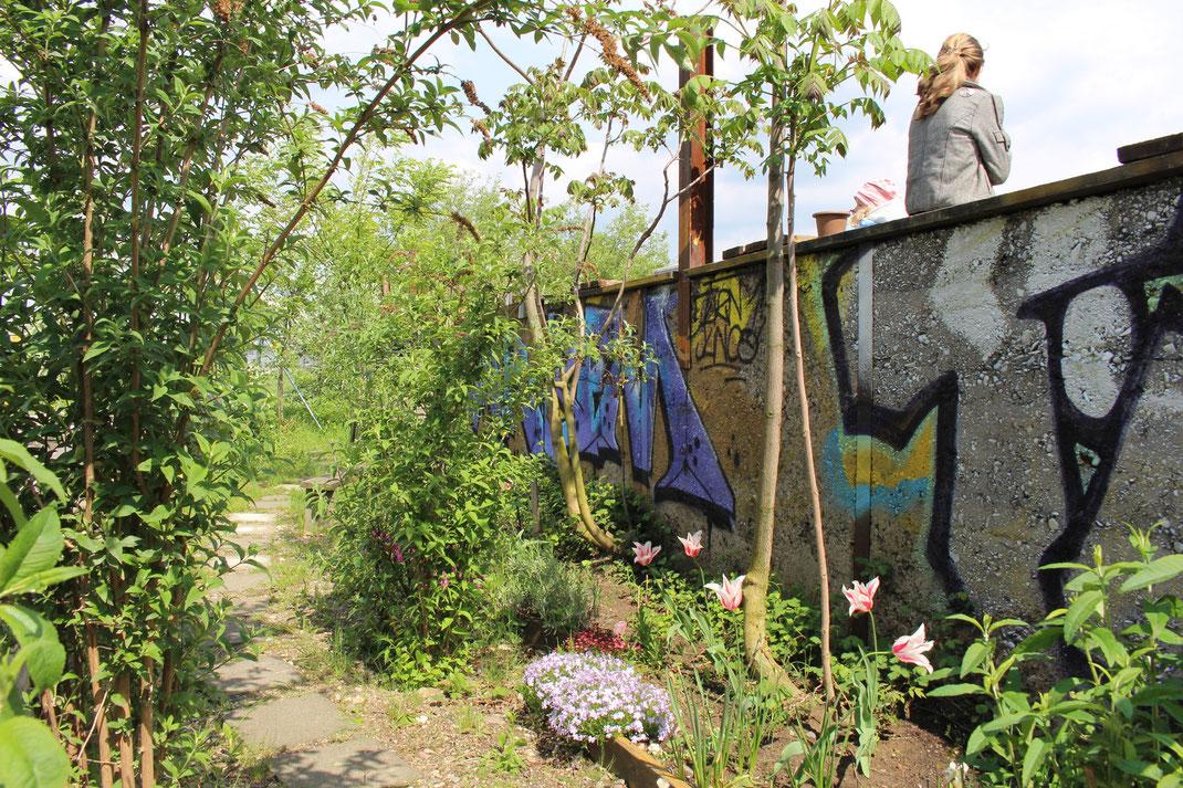 Der Hafengarten wird vom HafenAkademie e. V. koordiniert. Nachbarn übernehmen Patenschaften für Hochbeete. Foto: Eva Rusch