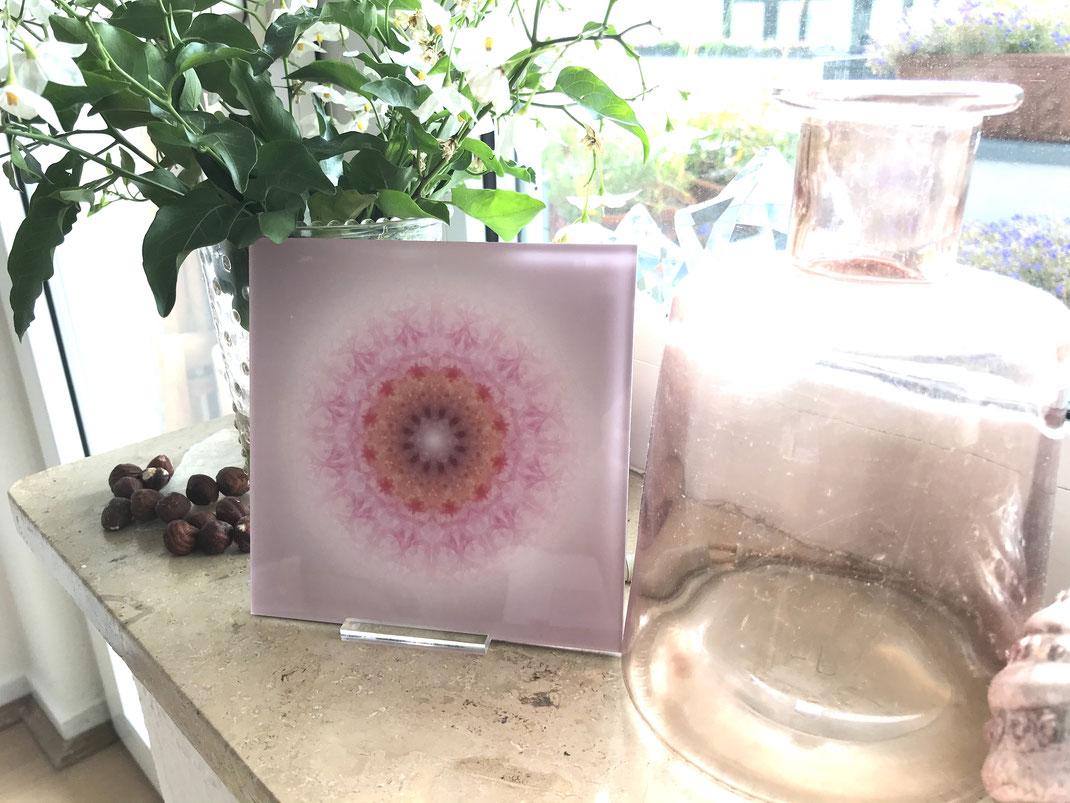 """Lebendiger Meisterkristall """"respekTIERE"""" im Sonderformat 13 x 13 cm, Echtfoto hinter Acrylglas mit Aufsteller © Susanne Barth"""