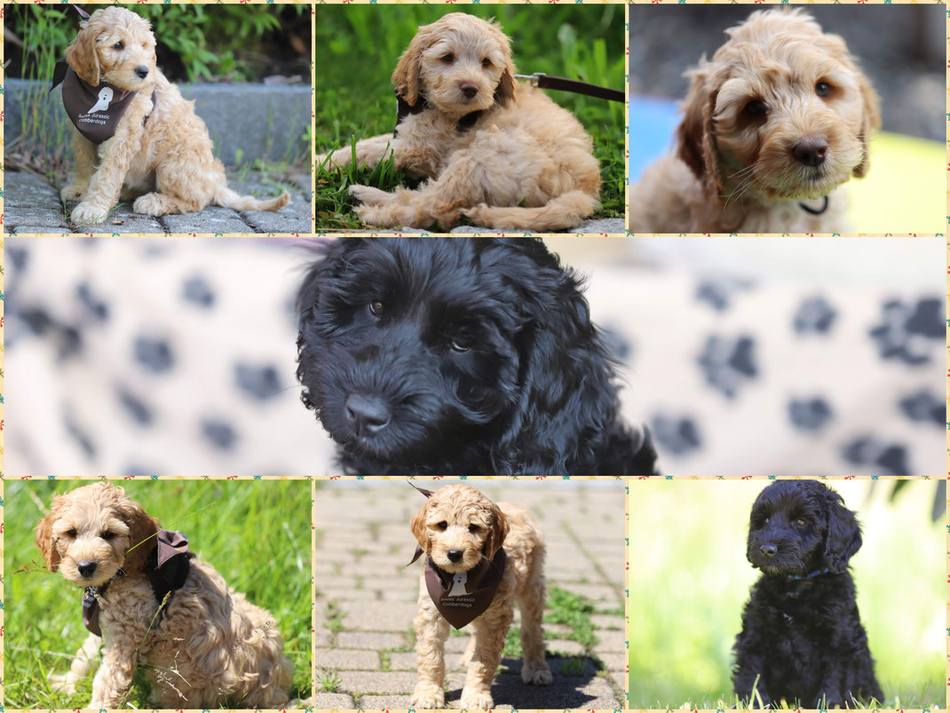 Olten SMILLA, SAMMY, BAILEY, LILY LOUIE, JIMMY, FLASH