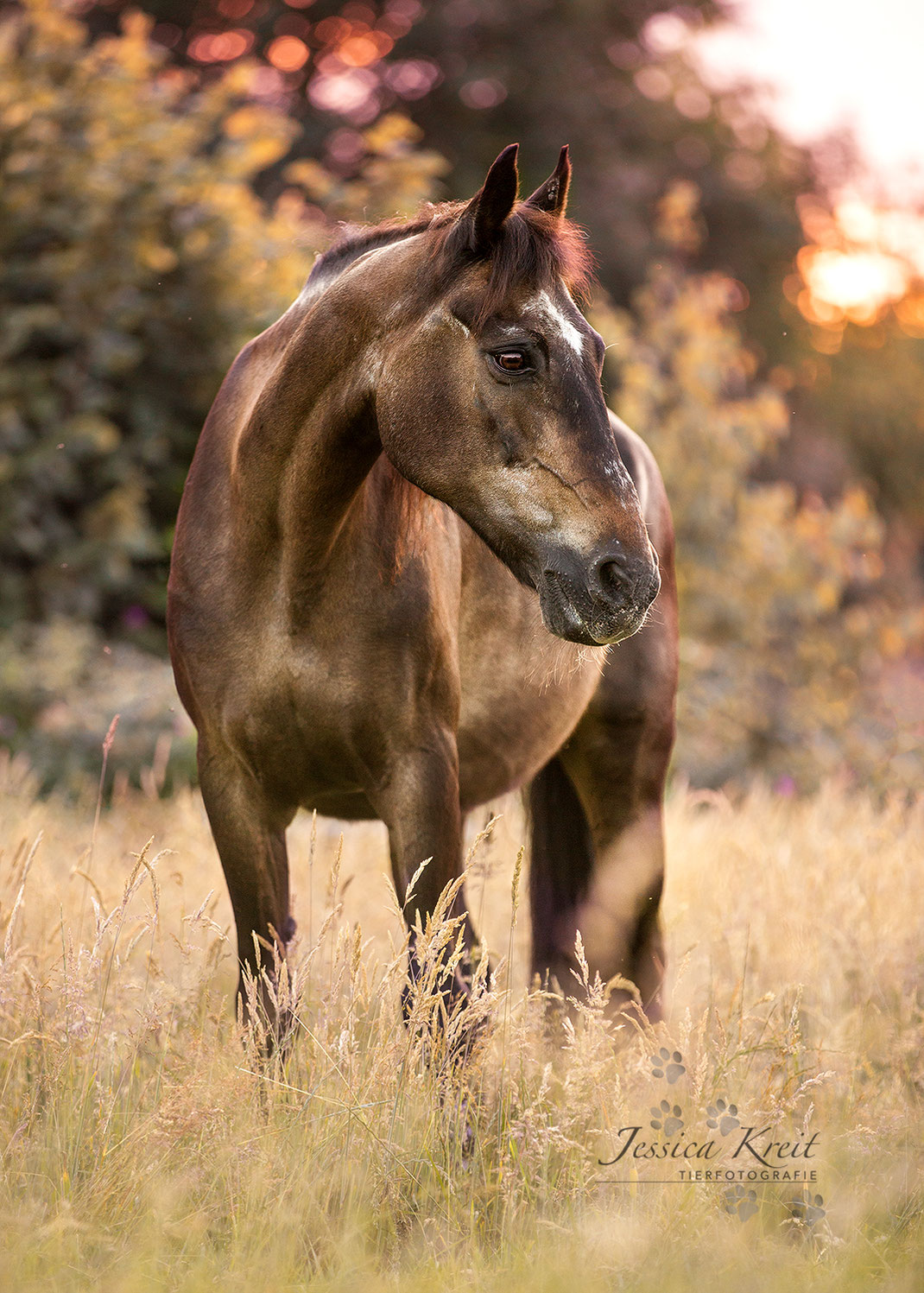 Pferde-Omi 'Donna'