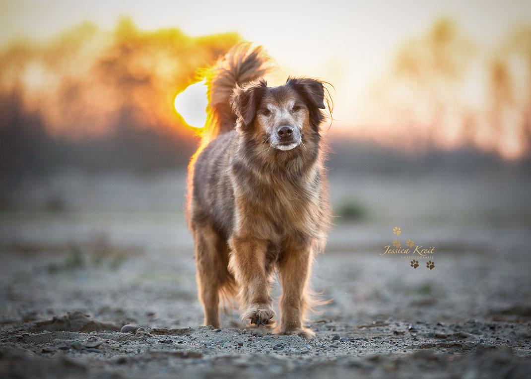 Hunde-Opi Sparky blind- aber immer noch schön und vor allem voller Lebensfreude